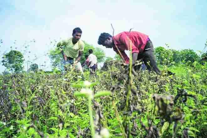 油籽农民搬到其他作物作为价格平面