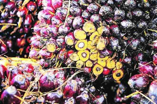 7月份植物油进口量增加了34%对卢比施保