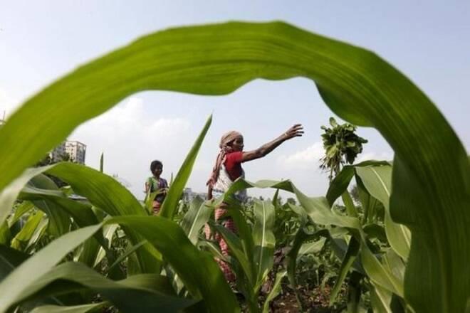 """Maha Agri董事会将207英亩发展进出口发展"