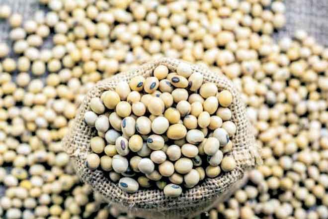 大豆膳食出口估计估计由2.5万吨吨为201017-18