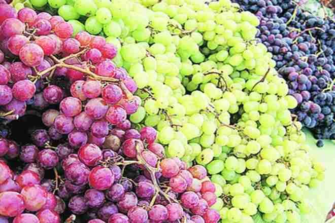 印度今年的葡萄葡萄出口在普遍存在的情况下降低了40%