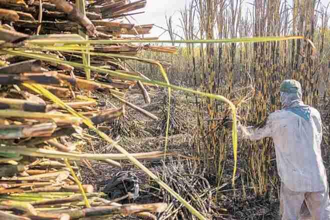 经过大量的摊牌,北方邦可以保留Lastyear的甘蔗价格