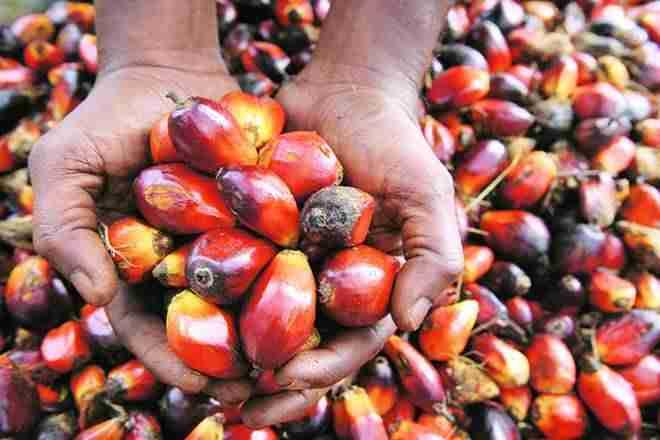 海洋反对在palmoil上的责任进口
