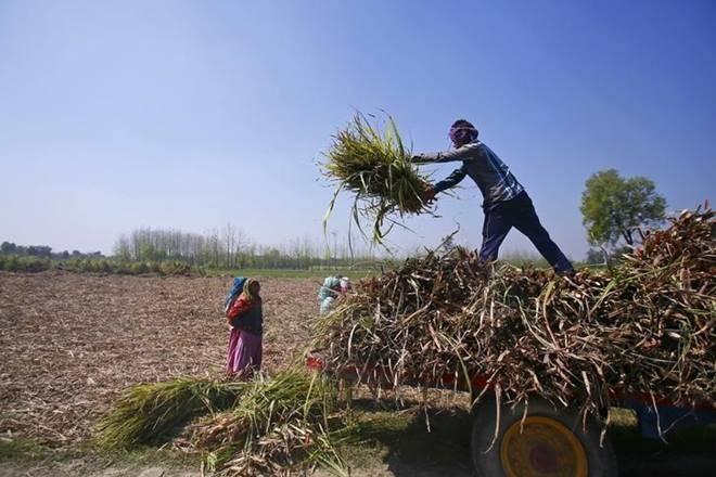 Maharashtra农民在糖赛开始后45天等待FRP付款