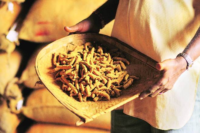 姜黄产出较高可能降低潮流的价格