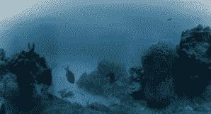 """""""互联网资讯:Hydrus VR摄像头系统可在水下深处捕获360个8K视频"""